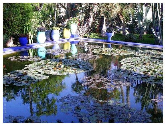 Maroc Marrakech Jardin Majorelle Bassin Aux Nenuphars